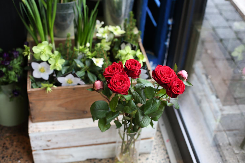 Rebel Rebel Red Roses
