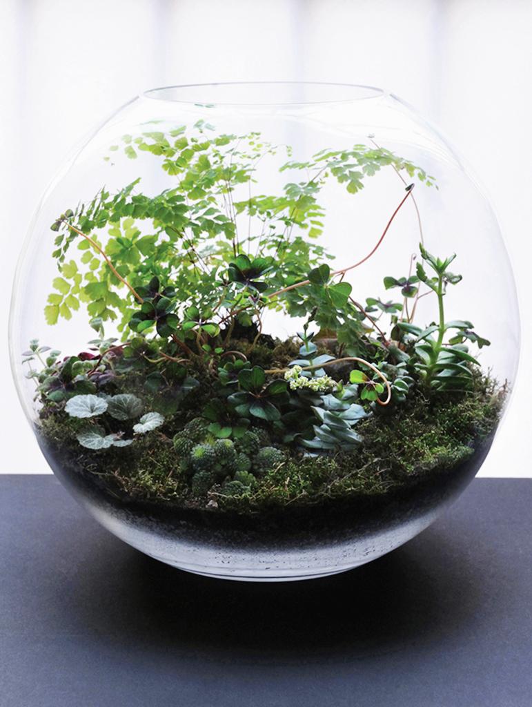 Kali Vermes Terrarium Grow Little