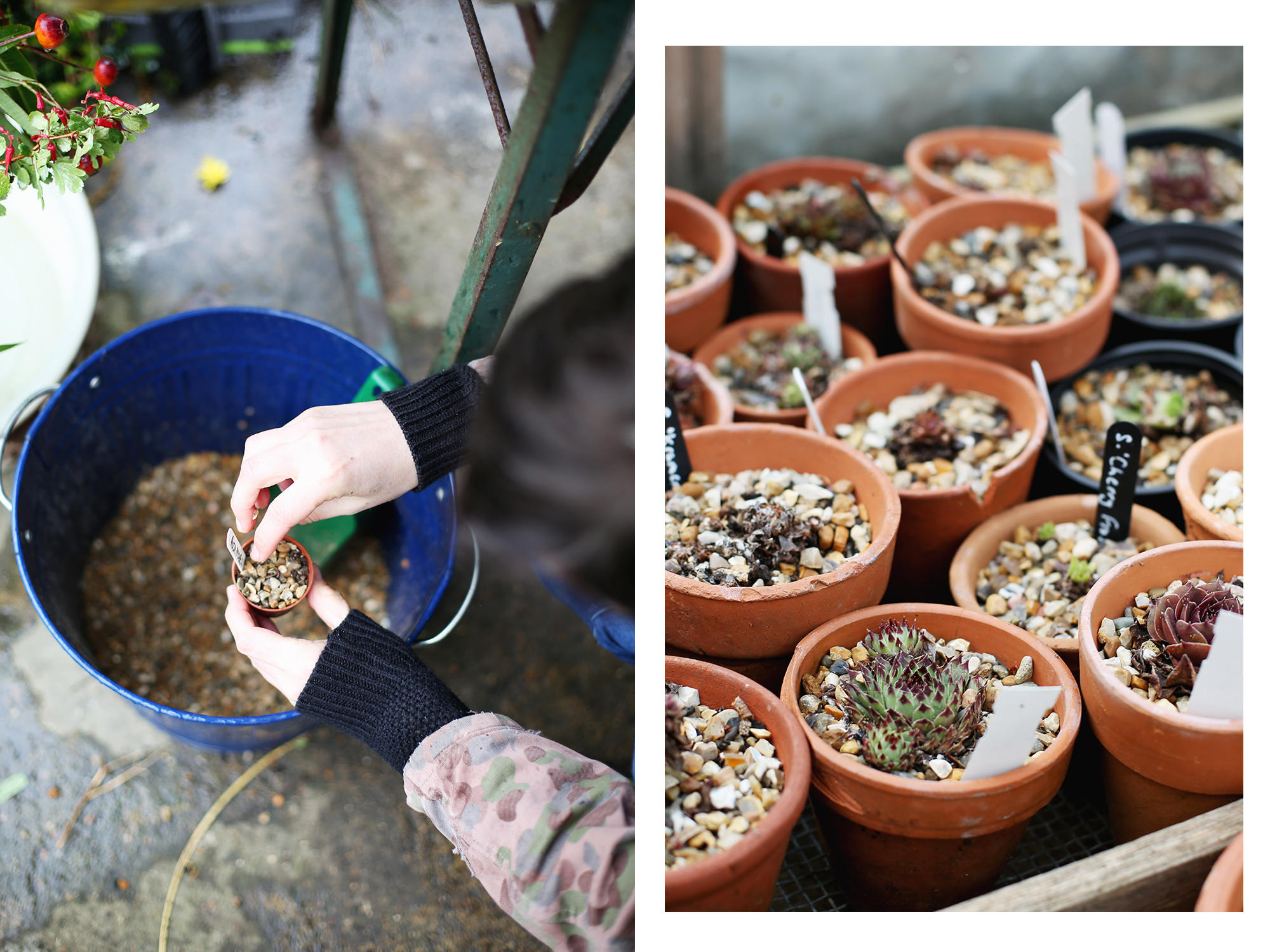 Lyndsey Haskey Gardening
