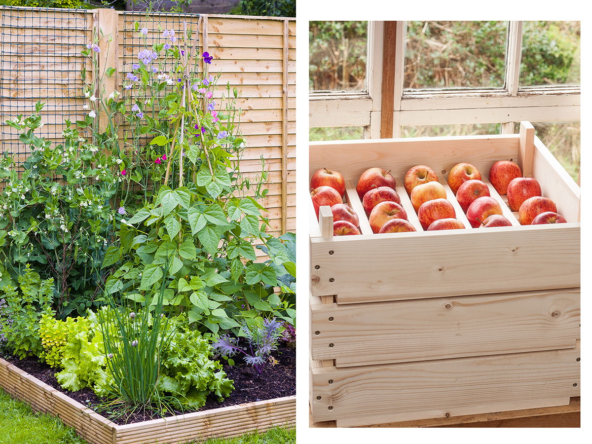 Building a better veg garden