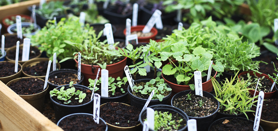 Alice Vincent's tips: how to handle herbs