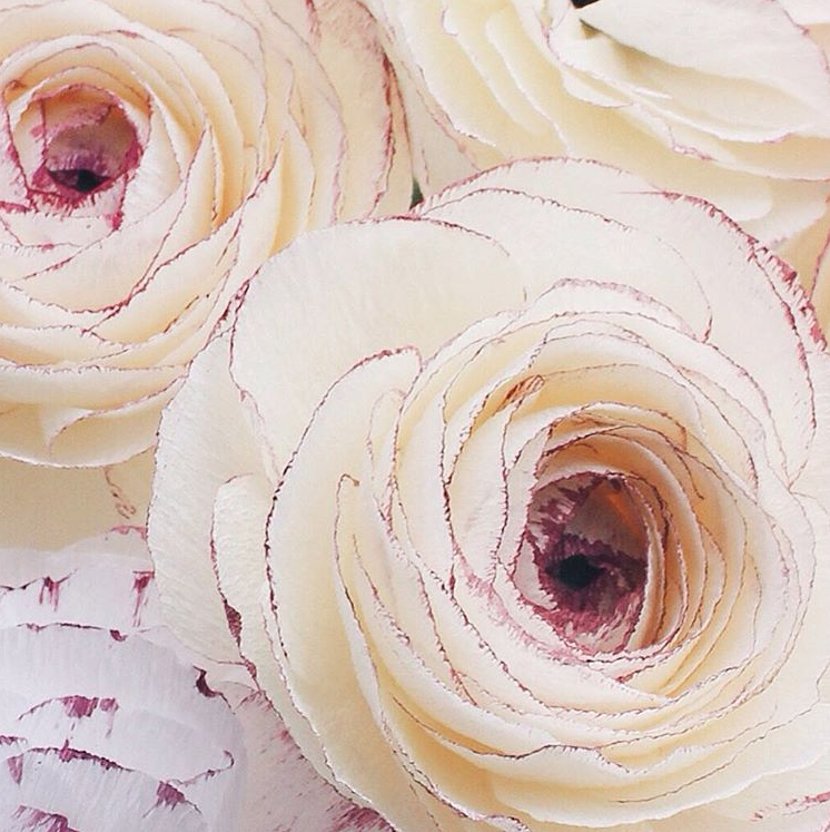 Handpainted ranunculus - A petal unfolds