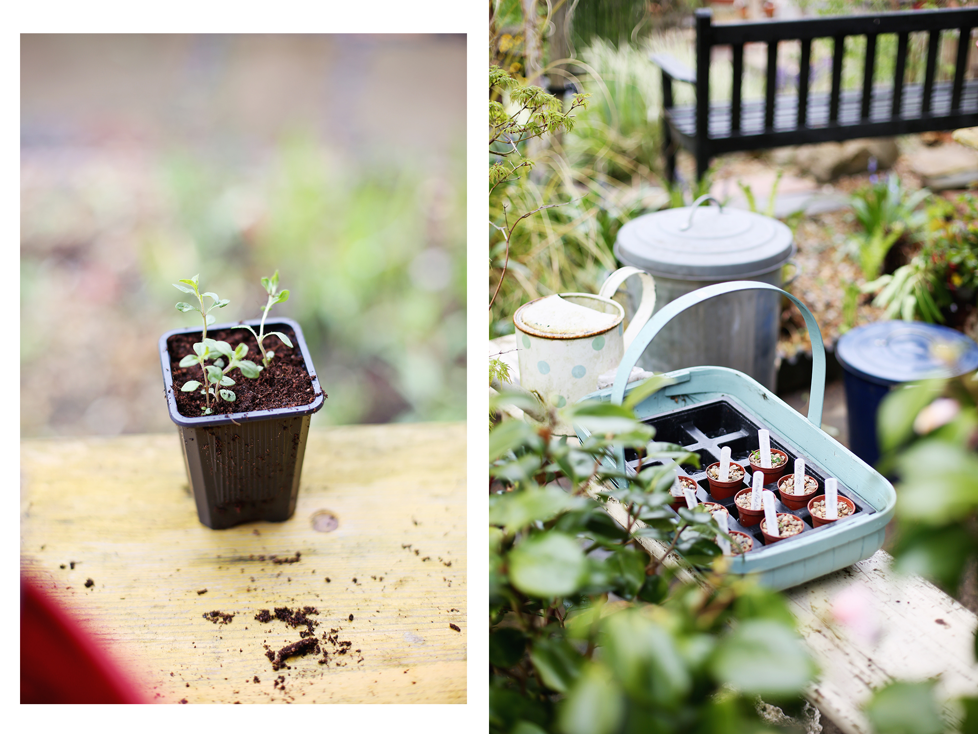in the garden with Lyndsey Haskell
