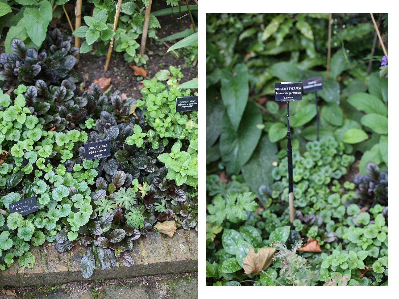 garden_herbs